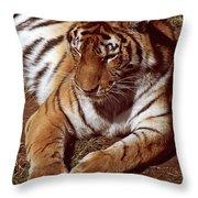Tiger I Throw Pillow