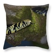 Tiger In The Tree.. Throw Pillow