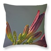 Tiger Lilly Buds 2 7172017  Throw Pillow