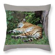 Tiger- Lincoln Park Zoo Throw Pillow