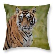 Tiger Look Throw Pillow