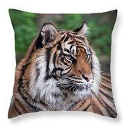 Sumatran Tigress Portrait  Throw Pillow