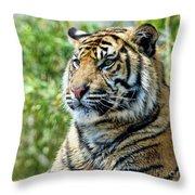 Tiger On Guard Throw Pillow