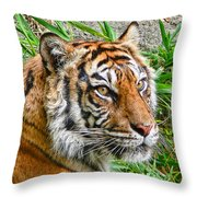 Tiger Portrait Throw Pillow
