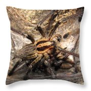 Tiger Spider  Throw Pillow