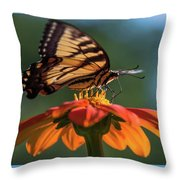 Tiger Swallowtail - 3 Throw Pillow