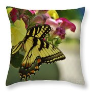 Tiger Swallowtail Butterfly On Begonia Bloom         June            Indiana Throw Pillow