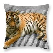 Tigers Look Throw Pillow