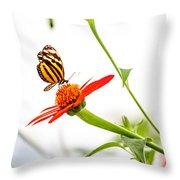 tigerwing at plus 1EV Throw Pillow
