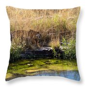 Tigress By The Stream Throw Pillow