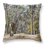 Tigress Walking Along A Track In Sal Forest Pench Tiger Reserve India Throw Pillow