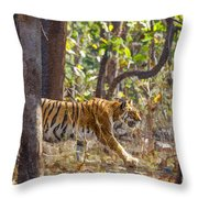 Tigress Walking Through Sal Forest In Pench Tiger Reserve  India Throw Pillow