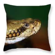 Timber Rattler Head On Throw Pillow
