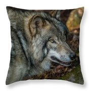 Timber Wolf Picture - Tw417 Throw Pillow