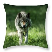 Timber Wolf Picture - Tw69 Throw Pillow