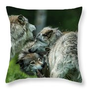 Timber Wolf Picture - Tw70 Throw Pillow