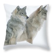 Timber Wolf Portrait Of Pair Sitting Throw Pillow