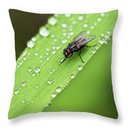 Time For A Wash Throw Pillow