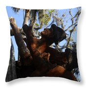 Timucuan Warriors Throw Pillow