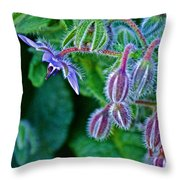 Tiny Blue Flower On A Bush At Pilgrim Place In Claremont-california  Throw Pillow