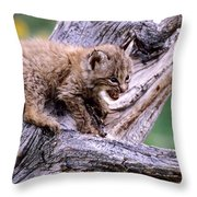 Tiny Bobcat Kitten Throw Pillow