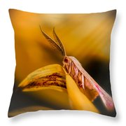 Tiny Butterfly Throw Pillow