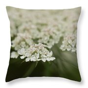 Tiny Cluster Of Queen Anne's Lace Throw Pillow