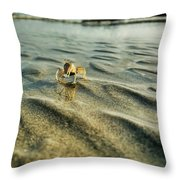 Tiny Crab In Water Throw Pillow