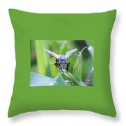 Tiny Fly Throw Pillow