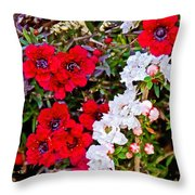 Burgundy Queen Bush At Pilgrim Place In Claremont-california Throw Pillow