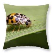 Tiny Spots Throw Pillow