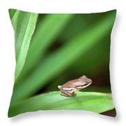 Tiny Tree Frog 01110 Throw Pillow