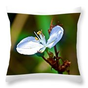 Tiny White Wildflower In Vicente Perez Rosales National Park Near Puerto Montt-chile  Throw Pillow