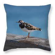 Tippi Hedren Throw Pillow