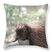 Tired Porcupine On A Fallen Log Throw Pillow