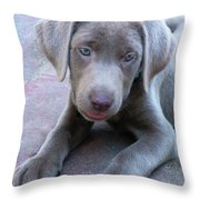 Tired Puppy Throw Pillow
