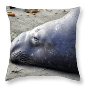Tired Seal Throw Pillow