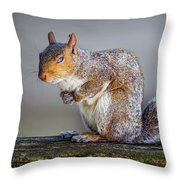 Tired Squirrel And Fly Throw Pillow