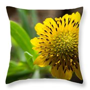 Tithonia Diversifolia Throw Pillow