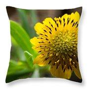 Tithonia Diversifolia Throw Pillow by Michael Tesar