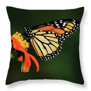 Tithonia Loving Monarch Throw Pillow