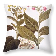 Tobacco Rustica, 1613 Throw Pillow