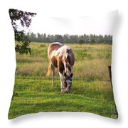 Tobiano Horse In Field Throw Pillow