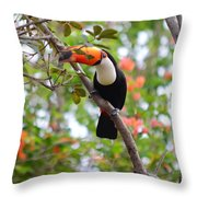 Toco Toucan Throw Pillow