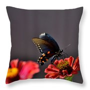 Todays Art 1416 Throw Pillow