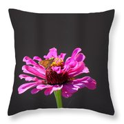 Todays Art 1426 Throw Pillow