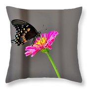 Todays Art 1427 Throw Pillow