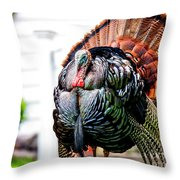 Male Turkey Throw Pillow