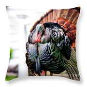 Male Turkey Throw Pillow