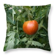 Tomato Plants In A Nebraska Garden Throw Pillow